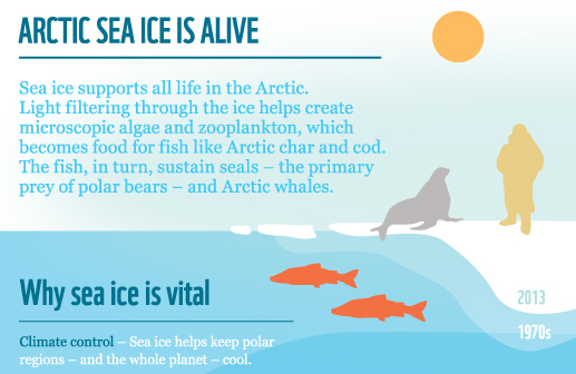 Infographic about Arctic sea ice by WWF