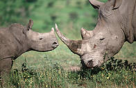 / ©: Martin Harvey / WWF-Canon