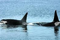© Alan BURGER / WWF-Canada