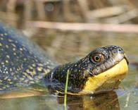 / ©: S. GILLINGWATER / WWF-Canada