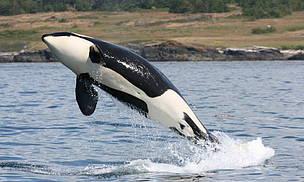 © Natalie Bowes / WWF-Canada