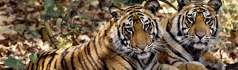 / ©: Vivek R. Sinha / WWF-Canon