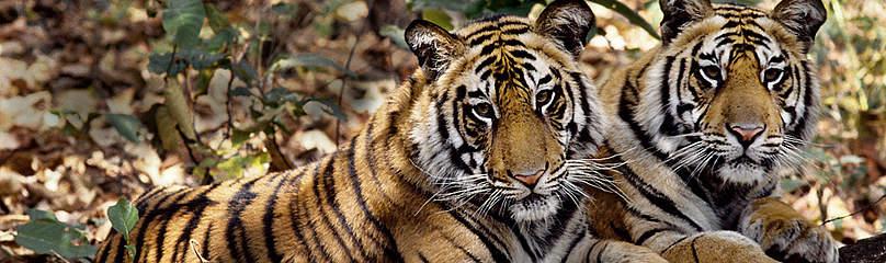 / ©: Vivek R. Sinha / WWF
