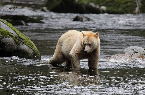  / &copy;: Natalie Bowes / WWF-Canada