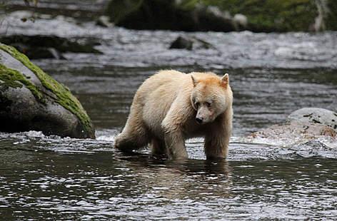 / ©: Natalie Bowes / WWF-Canada