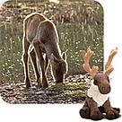 WWF-Canada  © WWF-Canada