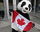 Panda in front of the CN Tower holding the Canadian Flag