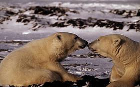 © François Pierrel / WWF