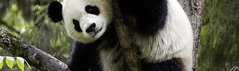 / ©: Bernard  DE WETTER / WWF