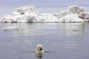 / ©: naturepl.com / Steven Kazlowski / WWF-Canon
