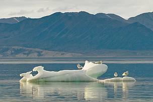© Andrew S. Wright  / WWF-Canada