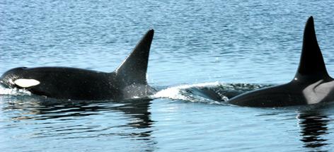 / ©: Alan Burger / WWF-Canada