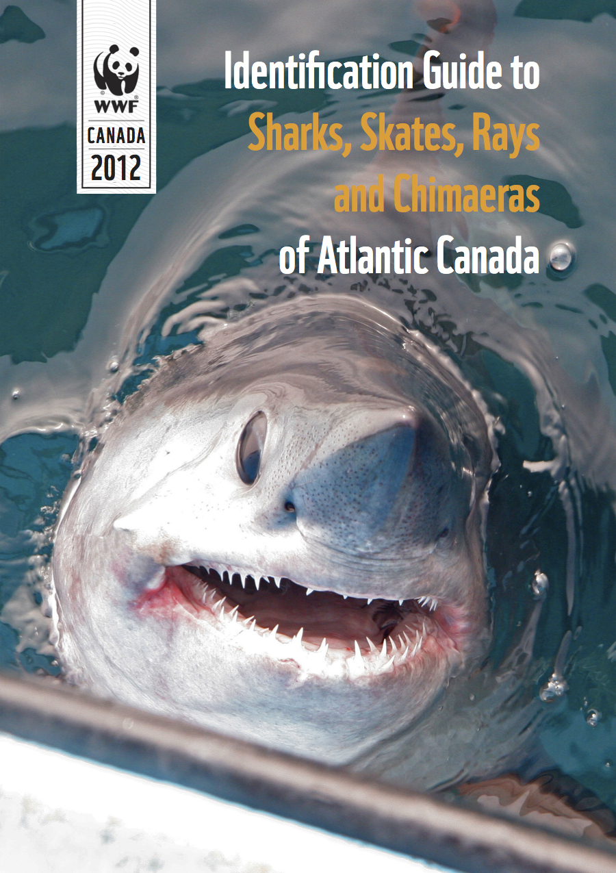 Identification guide to sharks, skates, rays and chimaeras of Atlantic Canada