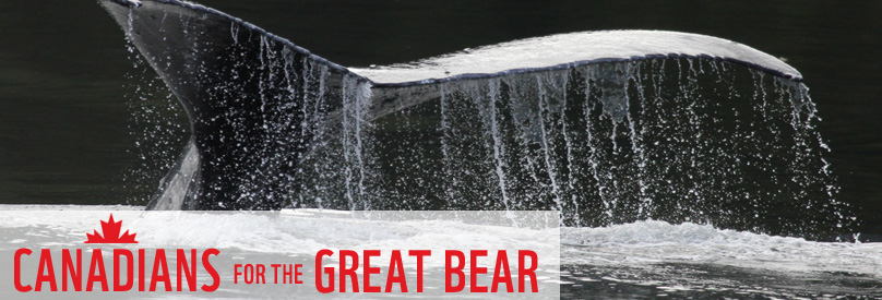 Canadian for the Great Bear