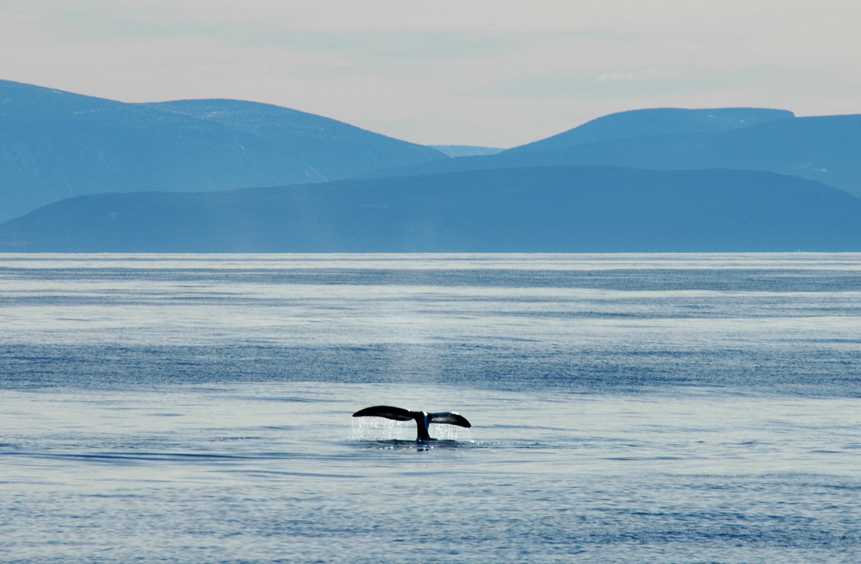 / ©: Tim Stewart / WWF-Canada