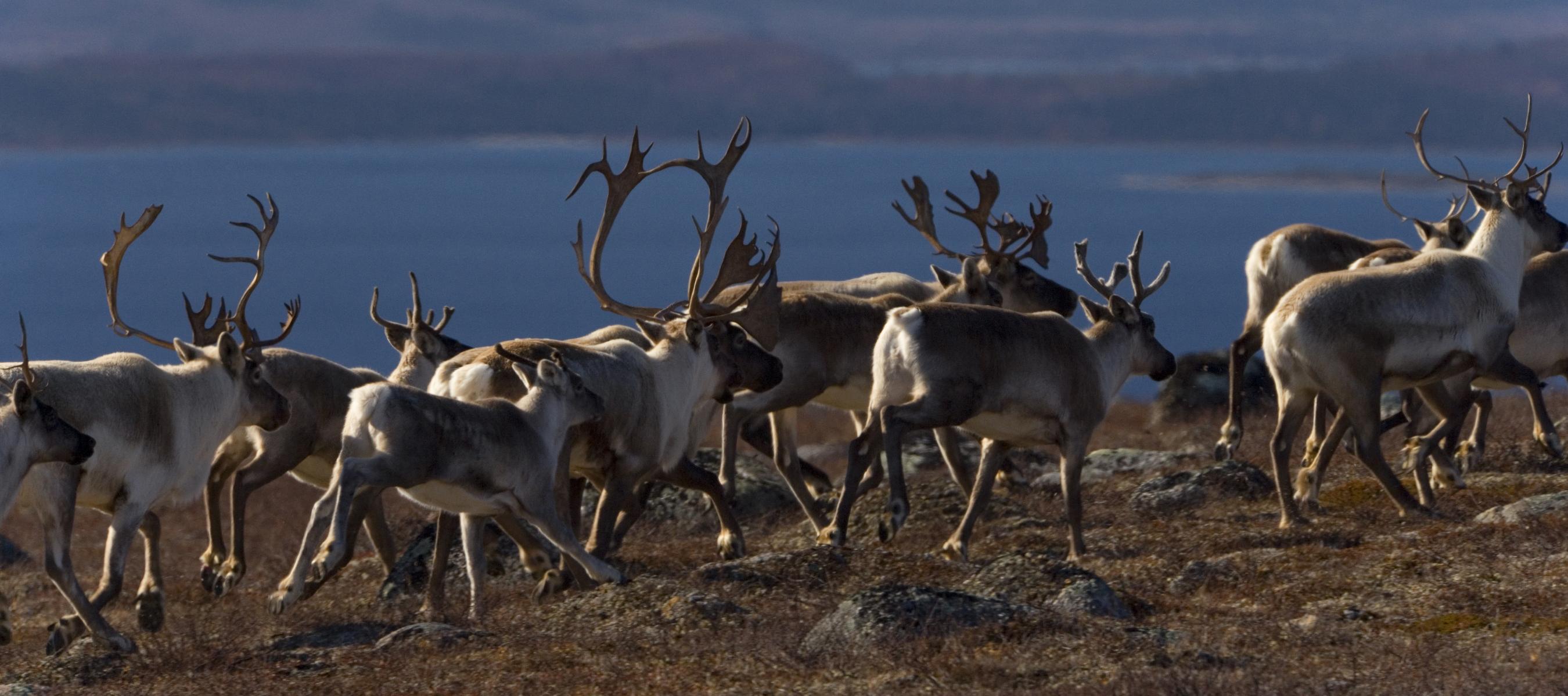 / ©: GaryAndJoanieMcGuffin.com / WWF-Canada