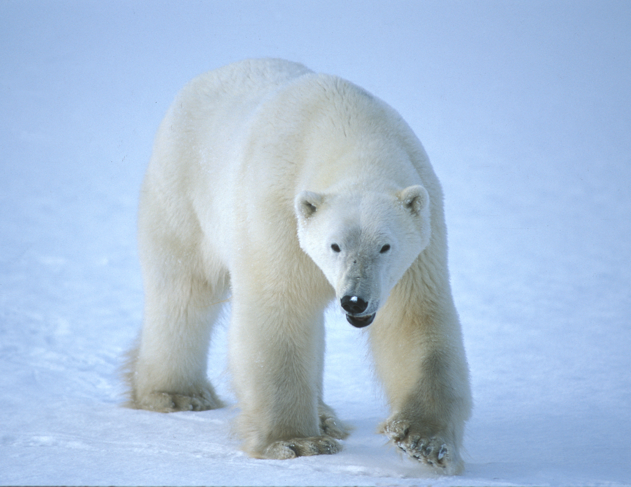 Learn more about how Arctic species are affected