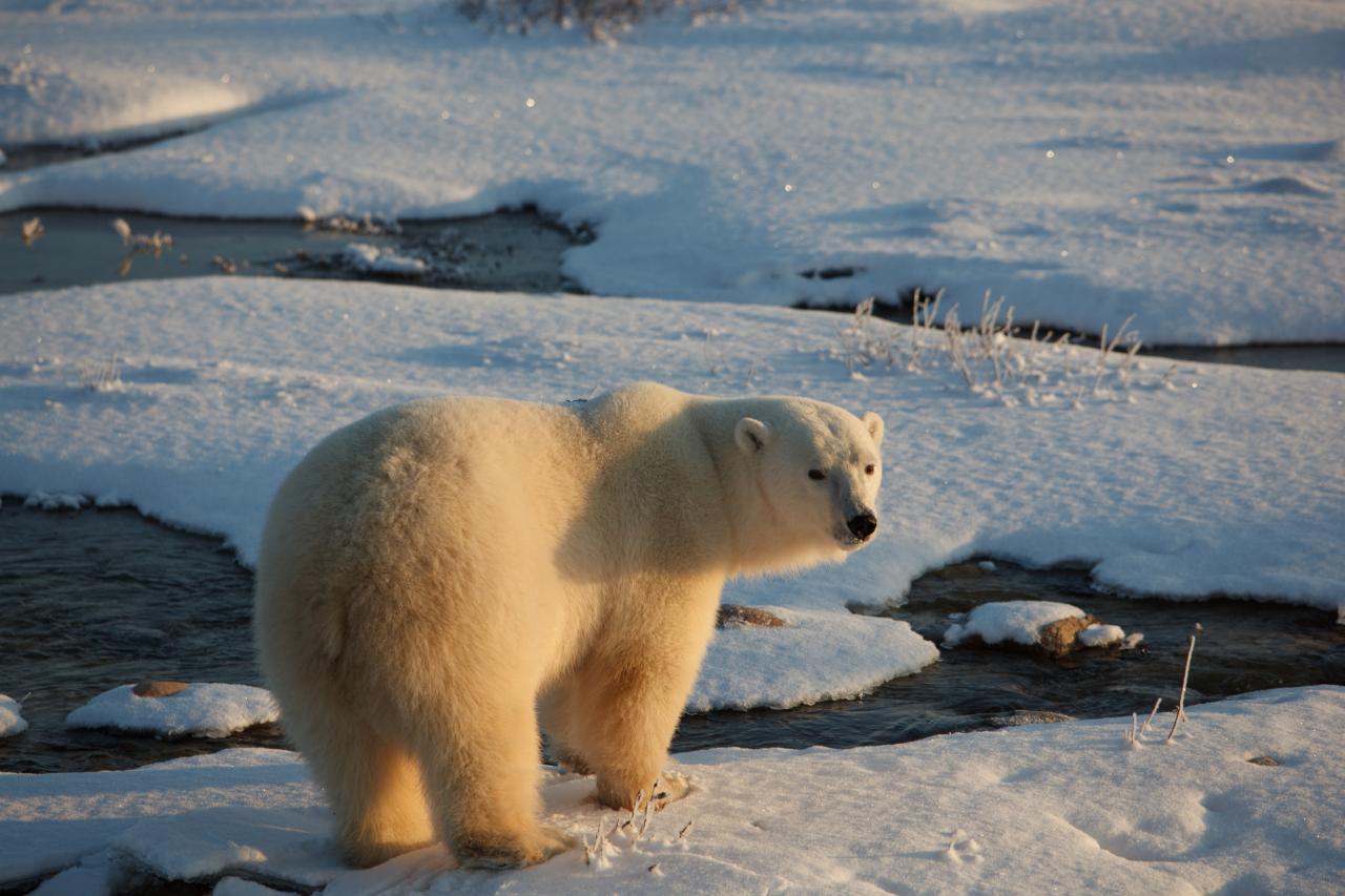 / ©: Jacquie Labatt / WWF-Canada