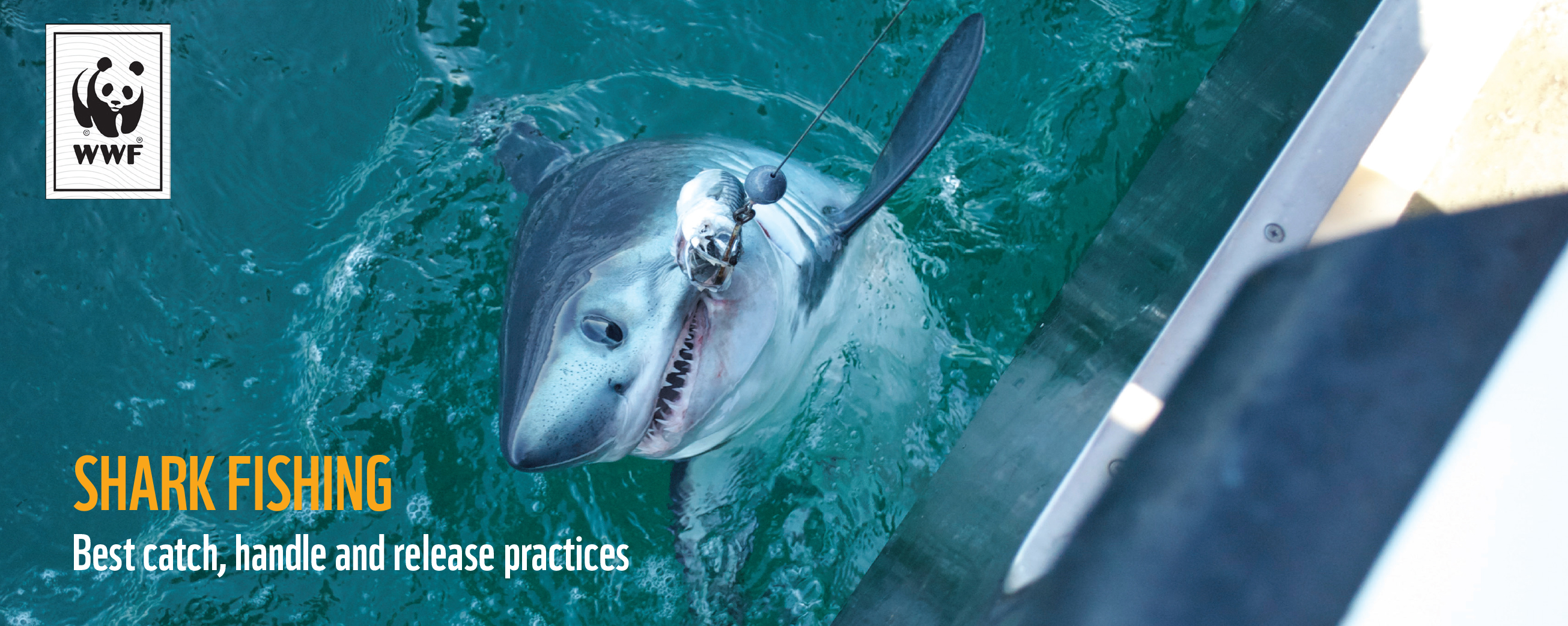 Shark Fishing: Best Catch, Handle and Release Practices