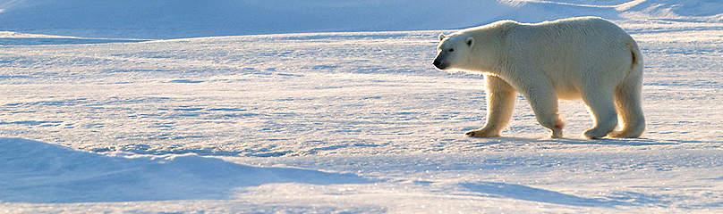 © Steve Morello / WWF