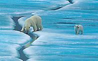 © Staffan Widstrand / WWF