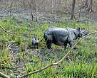 Two translocated rhinos in the Manas National Park of the state have given birth.