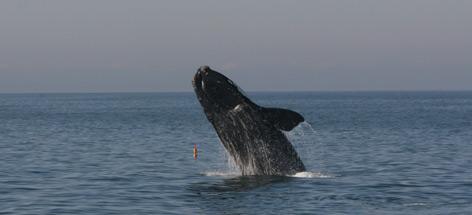 / ©: PCCS//PCCS-NOAA permit 633-176 / WWF-Canada