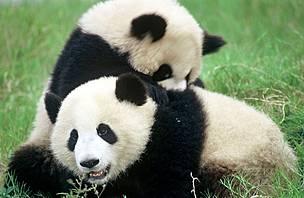 © Michel Gunther / WWF