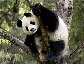 © © Bernard De Wetter / WWF