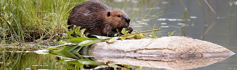 © © Frank PARHIZGAR / WWF-Canada