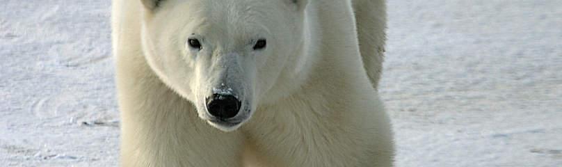 © Marie-Chantal MARCHAND / WWF-Canada