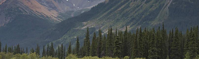 © Tim Irvin / WWF-Canada