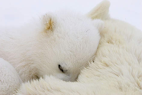 / ©: naturepl.com / Suzi Eszterhas / WWF-Canon