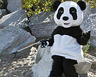Panda at Shoreline Cleanup