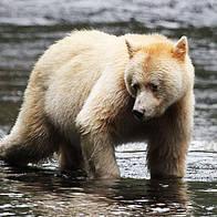 © Tim STEWART / WWF-Canada