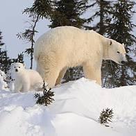 © Peter Ewins / WWF-Canada