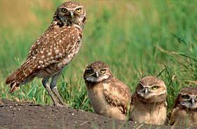 © Wilf SCHURIG / WWF-Canada