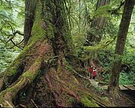 / ©: Garth Lenz / WWF-Canada