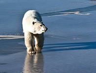 / ©: © WWF-Canada / James Carpenter