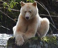 / ©:  Tim Irvin / WWF-Canada