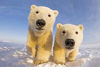 © naturepl.com / Steven Kazlowski / WWF